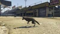 How to become a coyote in GTA 5.