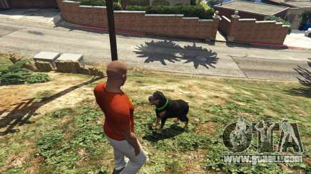 Walking the dog from GTA 5