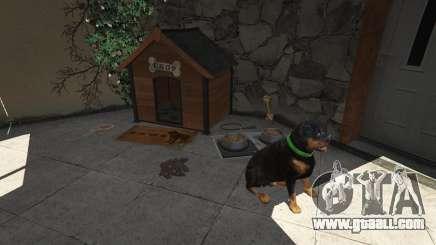 The dog in GTA 5