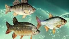 New fish (freshwater)